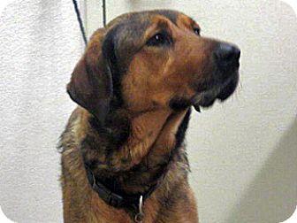 Rottweiler mix dog for adoption in wildomar california mocha