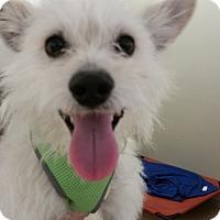 Adopt A Pet :: Kimba - Valencia, CA