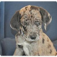 Adopt A Pet :: Petrolia - Broomfield, CO