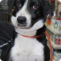 Adopt A Pet :: Dawnie - Brooklyn, NY