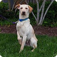 Adopt A Pet :: LJ - Arlington, VA