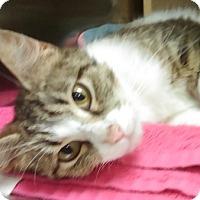 Adopt A Pet :: Penelope- 7 MONTHS - Naperville, IL