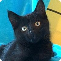 Adopt A Pet :: Noche - Colorado Springs, CO