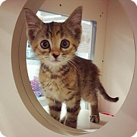 Adopt A Pet :: Casey - Taylorsville, IN