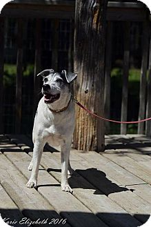 Jack Russell Terrier Mix Dog for adoption in Mount Hope, Ontario - Snooker