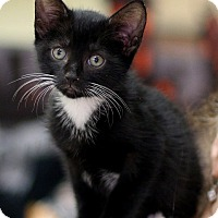 Adopt A Pet :: Uncle Chicky - New York, NY