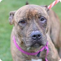 Adopt A Pet :: Gretta (foster care) - Philadelphia, PA