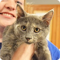 Adopt A Pet :: Georgette - Lincoln, NE