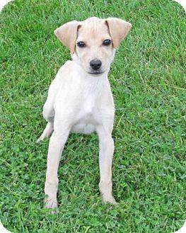 Hound (Unknown Type) Mix Puppy for adoption in Woodstock, Illinois - Maggie