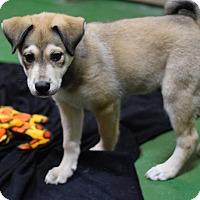 Adopt A Pet :: Wesley - Manhattan, NY