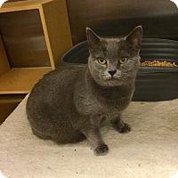 Adopt A Pet :: Gemma - Colmar, PA