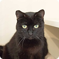 Adopt A Pet :: Ollie - Los Angeles, CA
