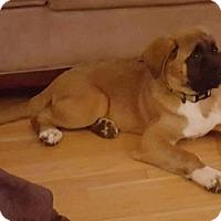 Adopt A Pet :: Mocha - Chambersburg, PA