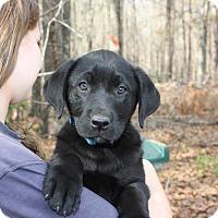 Adopt A Pet :: Miles - Allentown, NJ