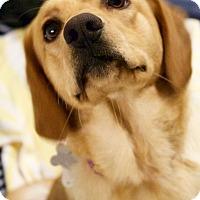 Adopt A Pet :: Mischa - Burlington, NC