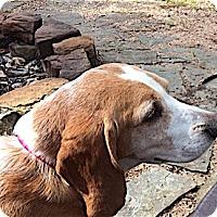 Adopt A Pet :: Cubby - Houston, TX