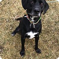 Adopt A Pet :: Roscoe - Sparta, NJ
