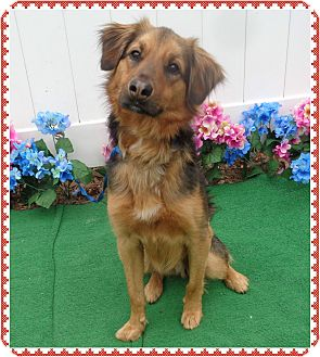 Saluki Mix Dog for adoption in Marietta, Georgia - MAX aka ZORRO
