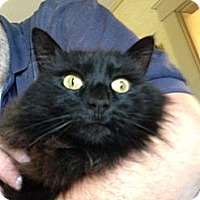 Adopt A Pet :: B. C. - Riverside, RI