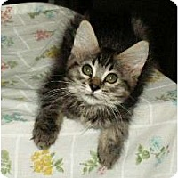 Adopt A Pet :: Feather - Scottsdale, AZ