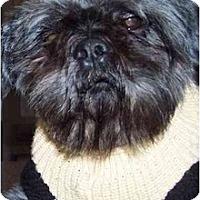Adopt A Pet :: Ruffles - Mays Landing, NJ