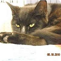 Adopt A Pet :: Tolstoy - Riverside, RI