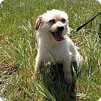 Adopt A Pet :: Paulina - 9 lbs- - Warwick, NY