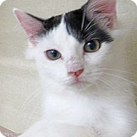 Adopt A Pet :: Bisous - Riverhead, NY