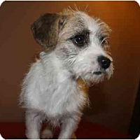 Adopt A Pet :: Micky - Staunton, VA