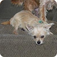 Adopt A Pet :: Triscuit - Phoenix, AZ