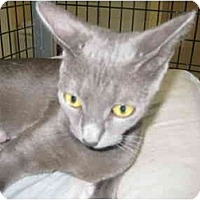 Adopt A Pet :: Lolita - Deerfield Beach, FL