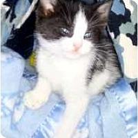 Adopt A Pet :: Suzy Q - Island Park, NY