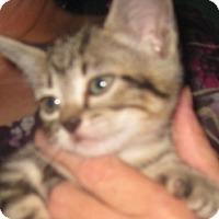 Adopt A Pet :: Mischief - Dallas, TX