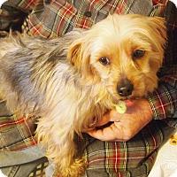 Adopt A Pet :: Whimsy - Prole, IA