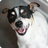 Adopt A Pet :: Zeus - Canoga Park, CA