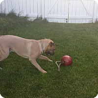 Adopt A Pet :: Roman - Courtesy Post - Rochester/Buffalo, NY