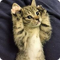 Adopt A Pet :: Freddie - Riverhead, NY