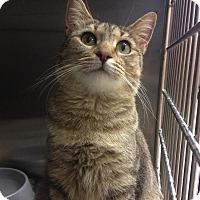Adopt A Pet :: Nettie - East Brunswick, NJ