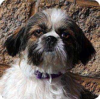 Dog Adoption Mid Missouri