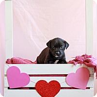 Adopt A Pet :: Selena - Waldorf, MD