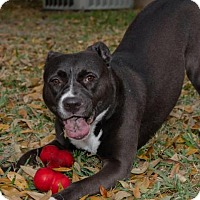 Adopt A Pet :: Allie - Plant City, FL