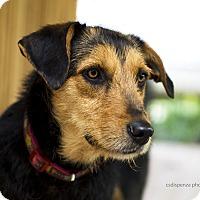 Adopt A Pet :: Matilda - Baton Rouge, LA