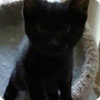 Adopt A Pet :: Kenzie - McHenry, IL