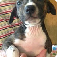 Adopt A Pet :: Liberty - Barnegat, NJ