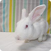 Adopt A Pet :: Sprite - Montclair, CA
