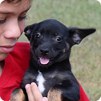Adopt A Pet :: Gravie facie - Harmony, Glocester, RI