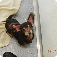 Adopt A Pet :: SKY - Sandusky, OH