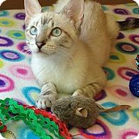 Adopt A Pet :: Kauai - Rocklin, CA