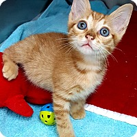 Adopt A Pet :: Pumpkin - Key Largo, FL