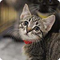 Adopt A Pet :: Brenda - Sacramento, CA